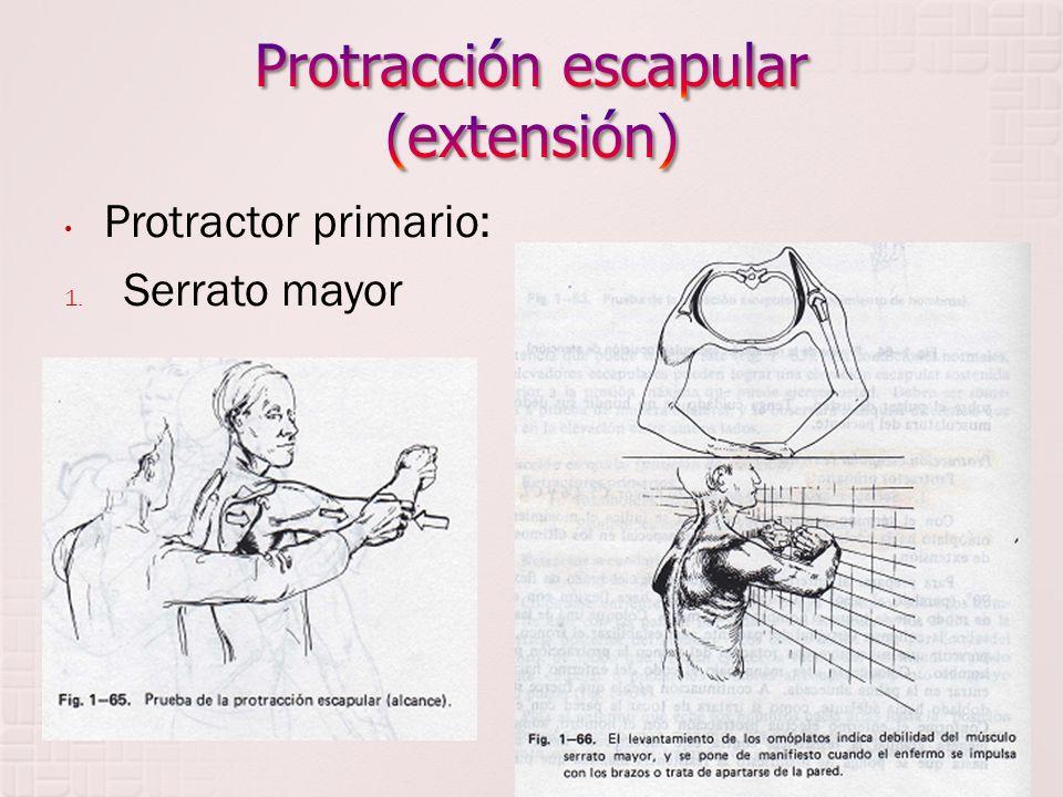 Protracción escapular (extensión)
