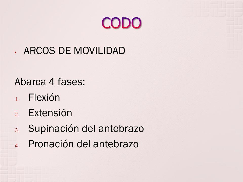 CODO ARCOS DE MOVILIDAD Abarca 4 fases: Flexión Extensión