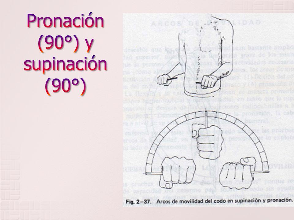 Pronación (90°) y supinación (90°)