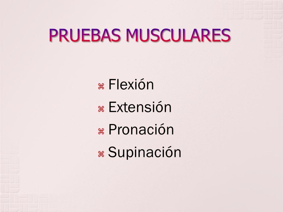 PRUEBAS MUSCULARES Flexión Extensión Pronación Supinación