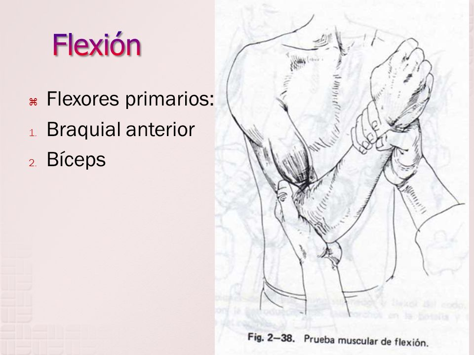 Flexión Flexores primarios: Braquial anterior Bíceps