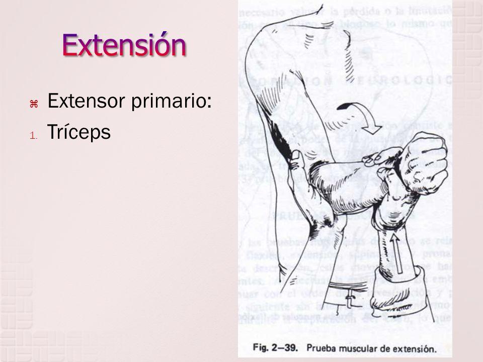 Extensión Extensor primario: Tríceps