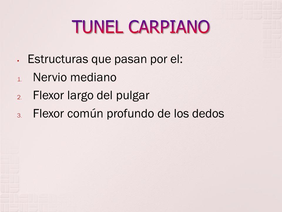 TUNEL CARPIANO Estructuras que pasan por el: Nervio mediano