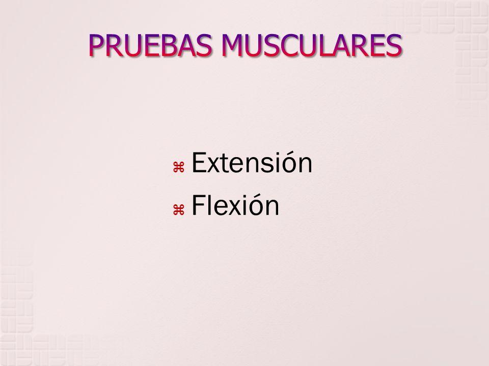 PRUEBAS MUSCULARES Extensión Flexión
