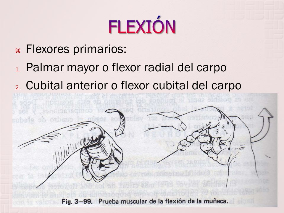 FLEXIÓN Flexores primarios: Palmar mayor o flexor radial del carpo