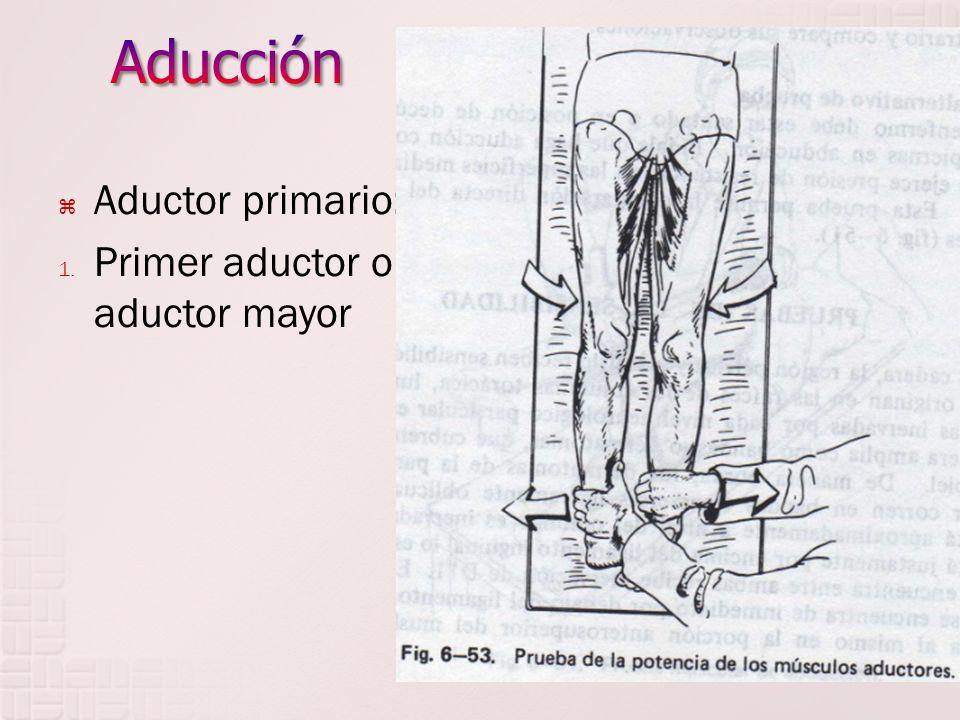 Aducción Aductor primario: Primer aductor o aductor mayor
