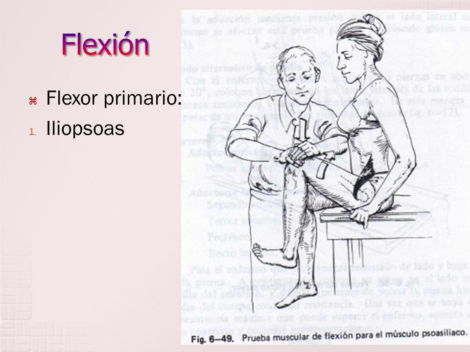 Flexión Flexor primario: Iliopsoas