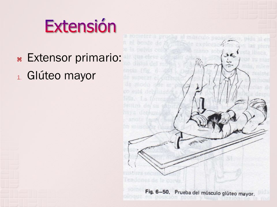 Extensión Extensor primario: Glúteo mayor