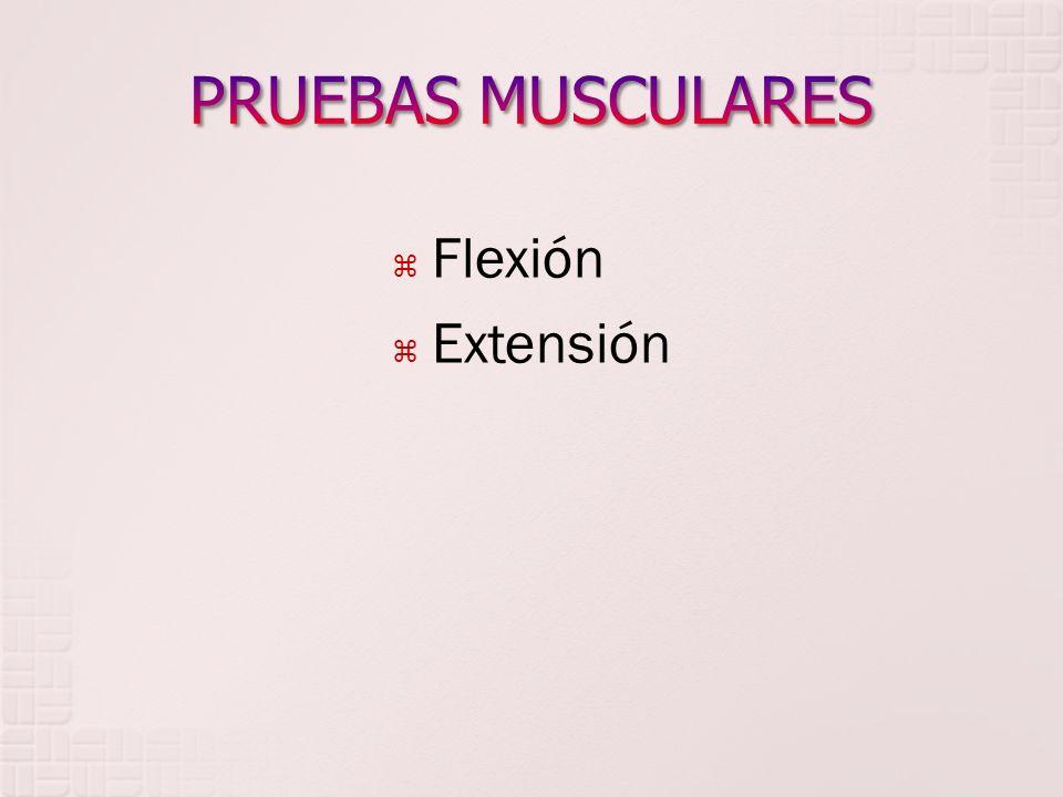 PRUEBAS MUSCULARES Flexión Extensión