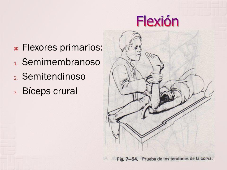 Flexión Flexores primarios: Semimembranoso Semitendinoso Bíceps crural