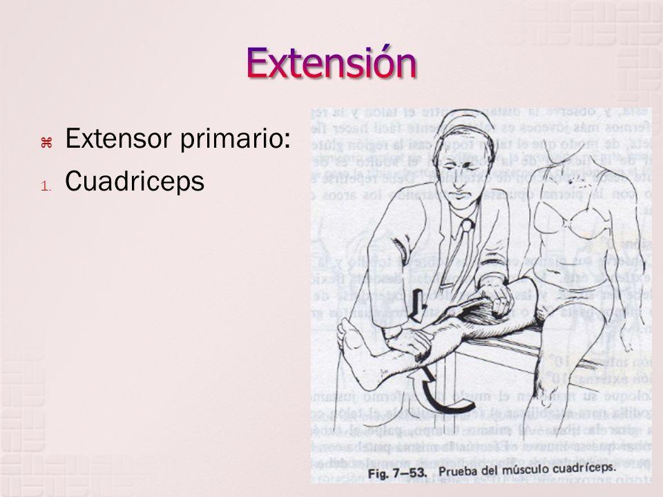 Extensión Extensor primario: Cuadriceps