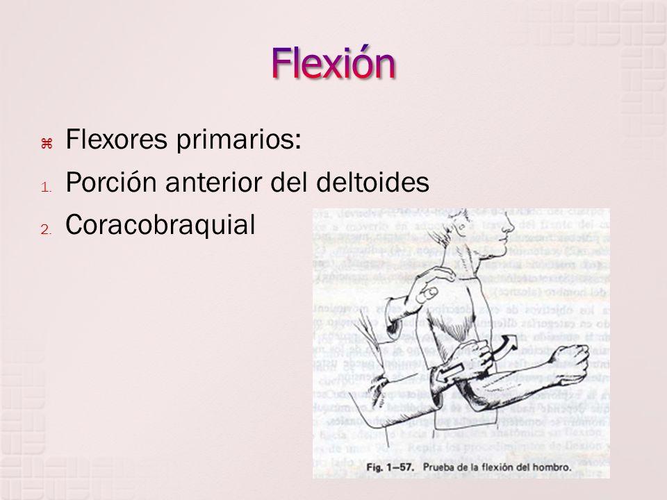 Flexión Flexores primarios: Porción anterior del deltoides