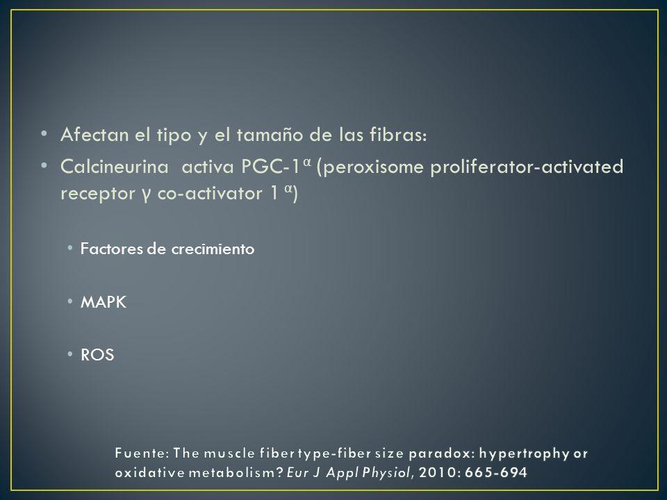 Afectan el tipo y el tamaño de las fibras: