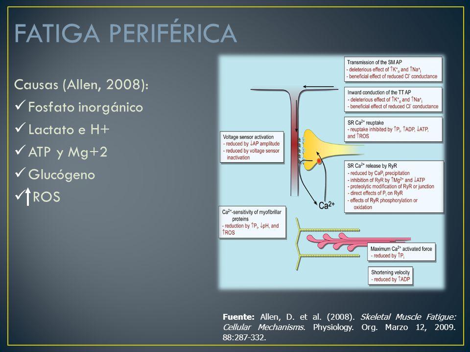 FATIGA PERIFÉRICA Causas (Allen, 2008): Fosfato inorgánico