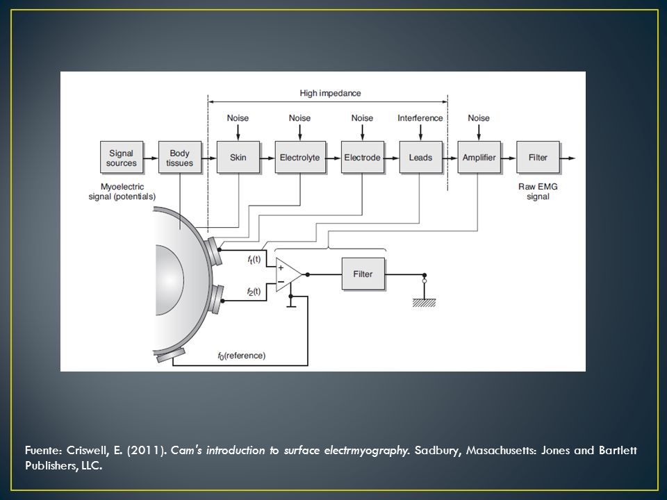 Fuente: Criswell, E. (2011). Cam s introduction to surface electrmyography.