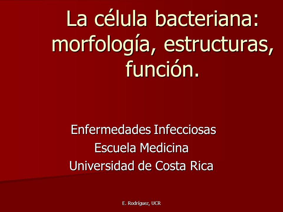 La célula bacteriana: morfología, estructuras, función.