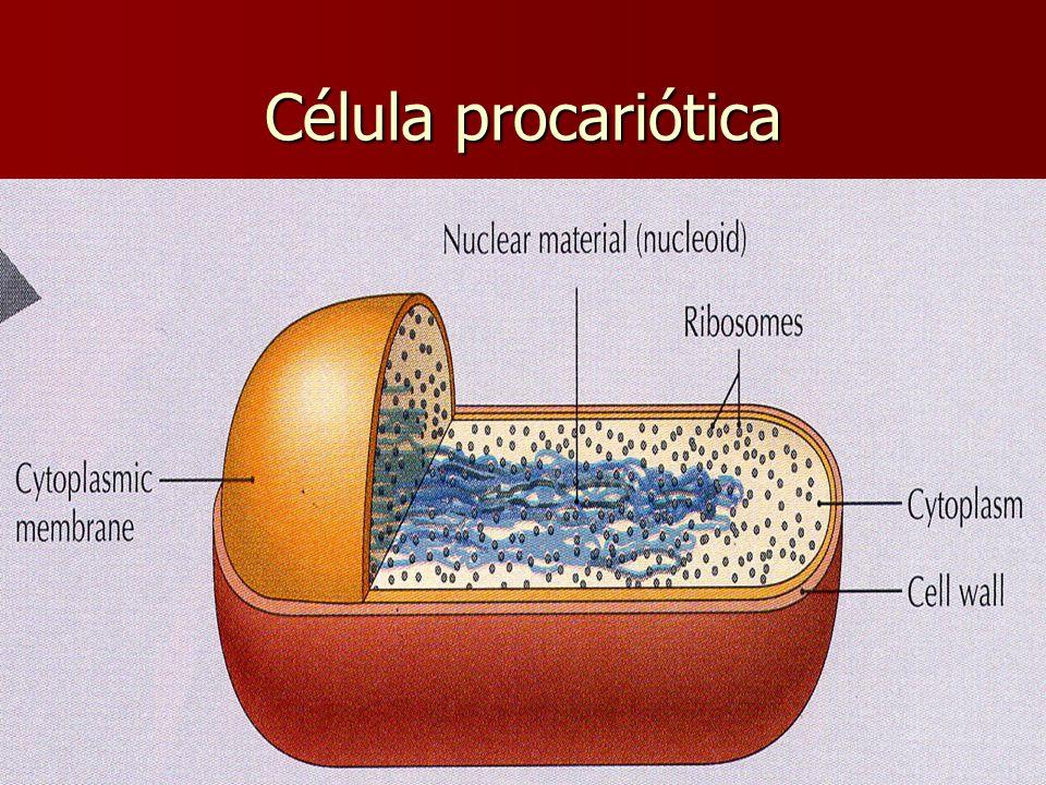 Célula procariótica E. Rodríguez, UCR