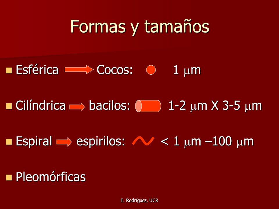 Formas y tamaños Esférica Cocos: 1 m