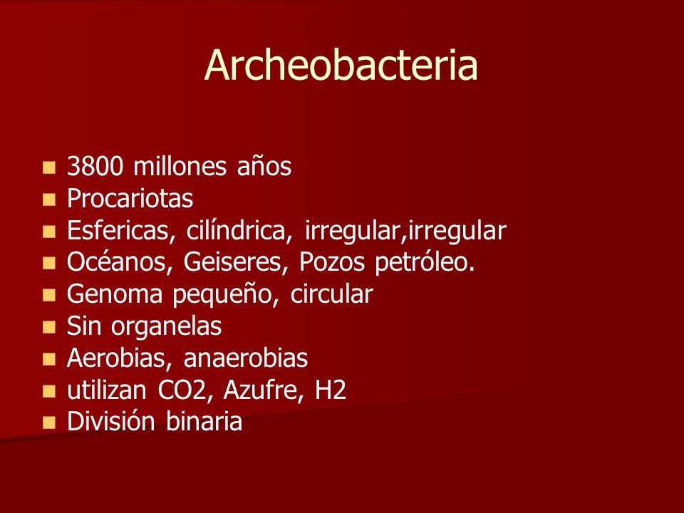 Archeobacteria 3800 millones años Procariotas