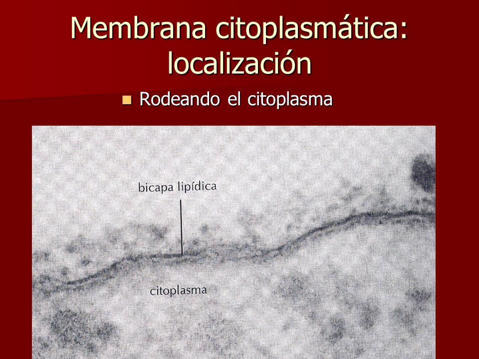 Membrana citoplasmática: localización