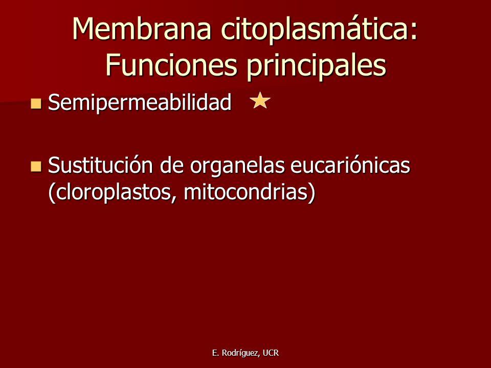 Membrana citoplasmática: Funciones principales