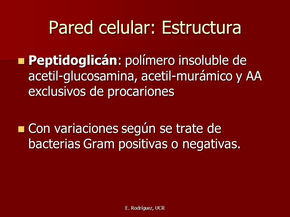 Pared celular: Estructura