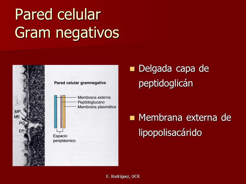 Pared celular Gram negativos