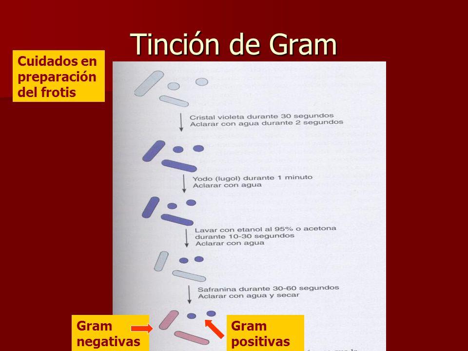 Tinción de Gram Cuidados en preparación del frotis Gram negativas
