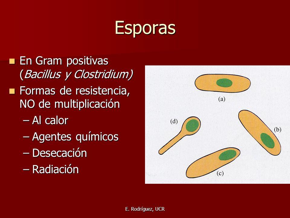 Esporas En Gram positivas (Bacillus y Clostridium)