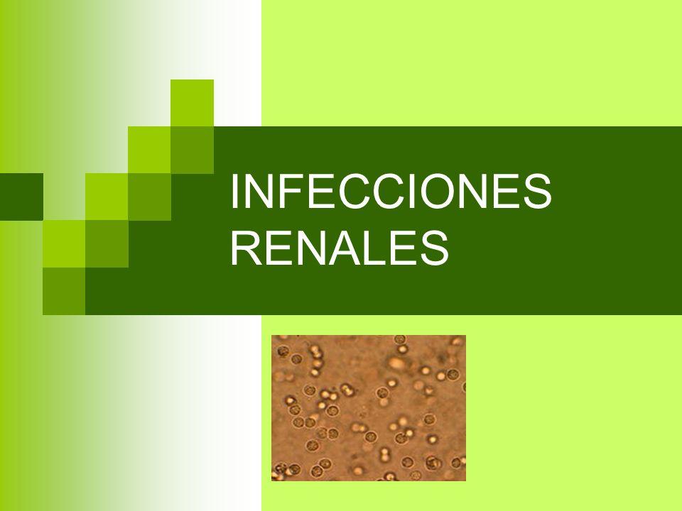INFECCIONES RENALES