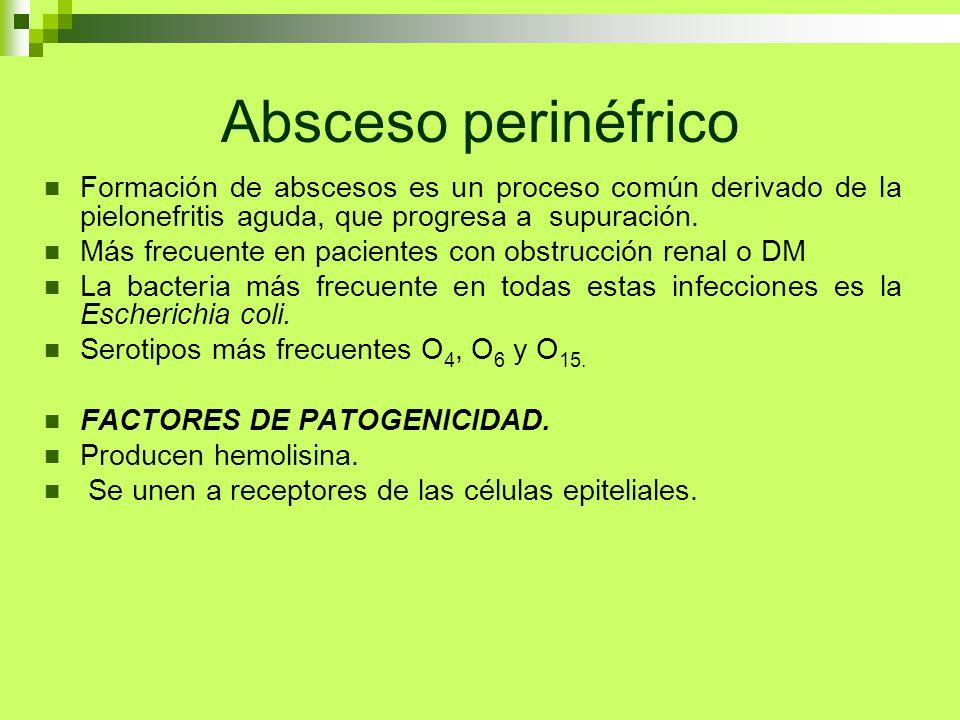 Absceso perinéfrico Formación de abscesos es un proceso común derivado de la pielonefritis aguda, que progresa a supuración.