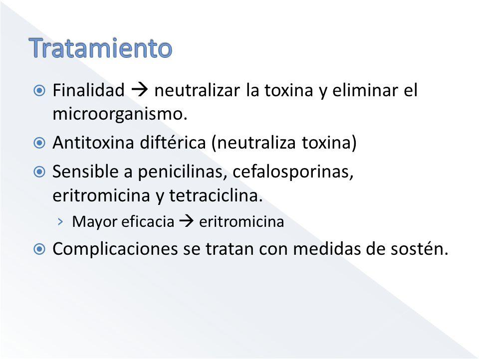 Tratamiento Finalidad  neutralizar la toxina y eliminar el microorganismo. Antitoxina diftérica (neutraliza toxina)