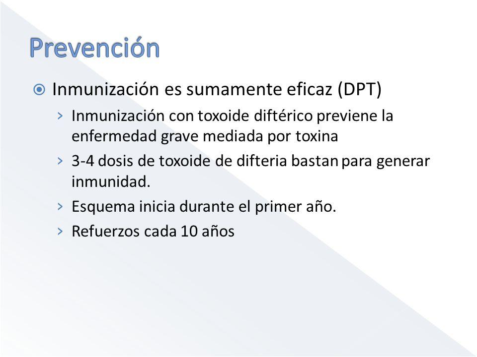Prevención Inmunización es sumamente eficaz (DPT)