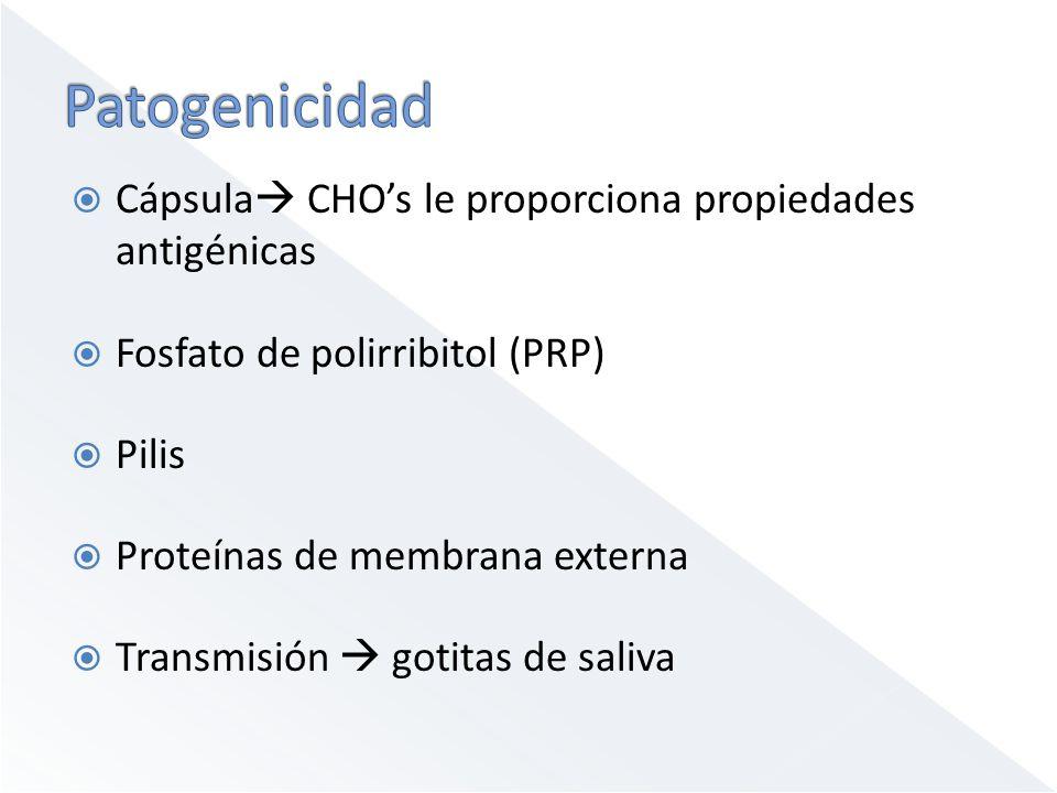 Patogenicidad Cápsula CHO's le proporciona propiedades antigénicas