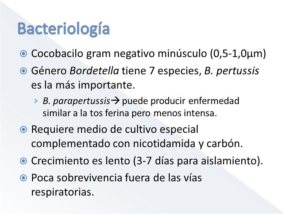 Bacteriología Cocobacilo gram negativo minúsculo (0,5-1,0μm)