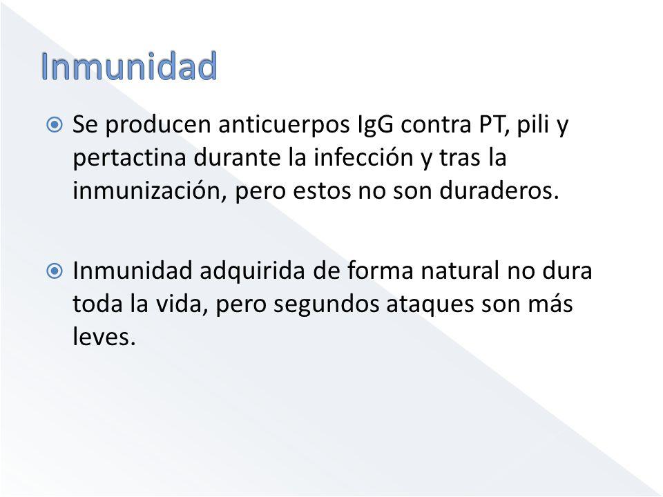 Inmunidad Se producen anticuerpos IgG contra PT, pili y pertactina durante la infección y tras la inmunización, pero estos no son duraderos.