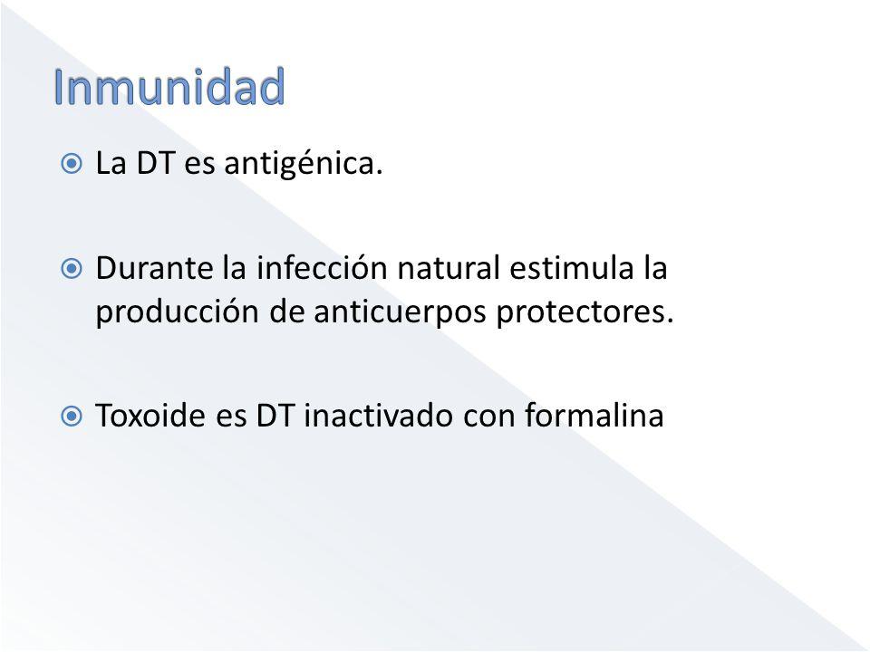 Inmunidad La DT es antigénica.