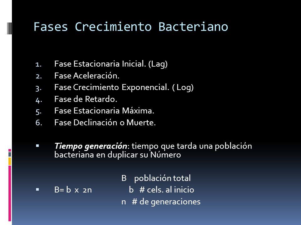 Fases Crecimiento Bacteriano
