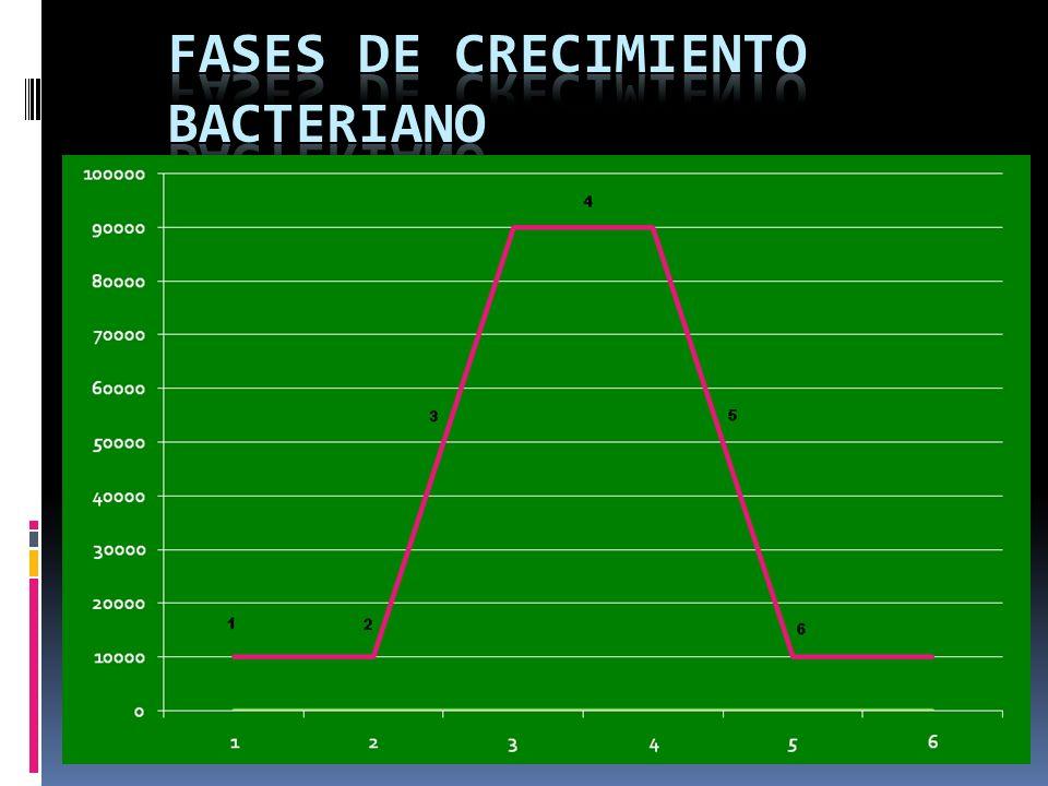 Fases de Crecimiento Bacteriano