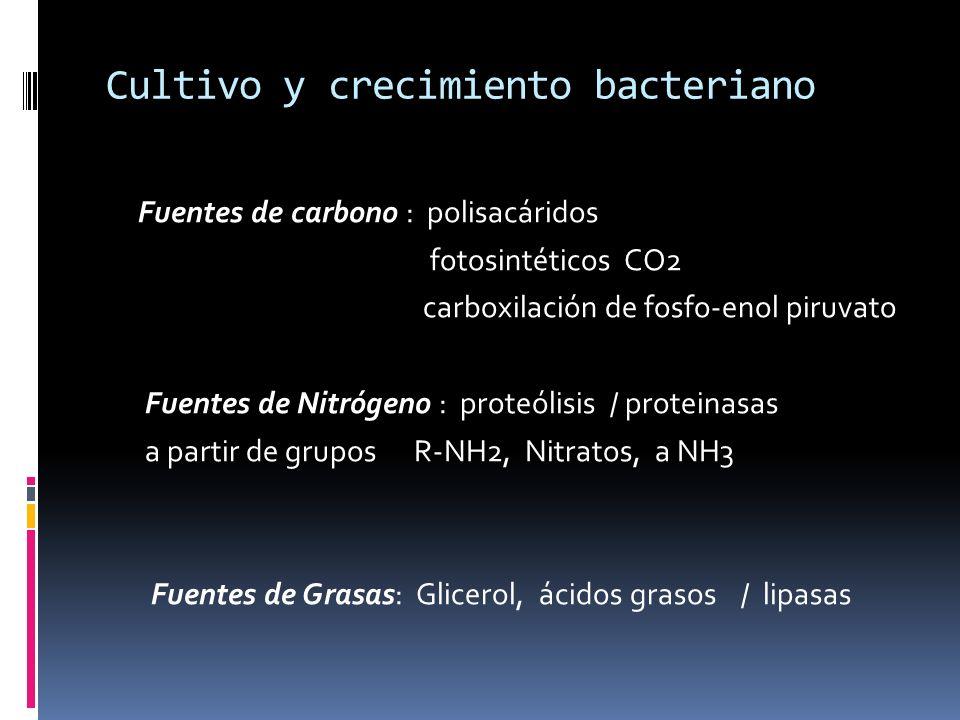 Cultivo y crecimiento bacteriano