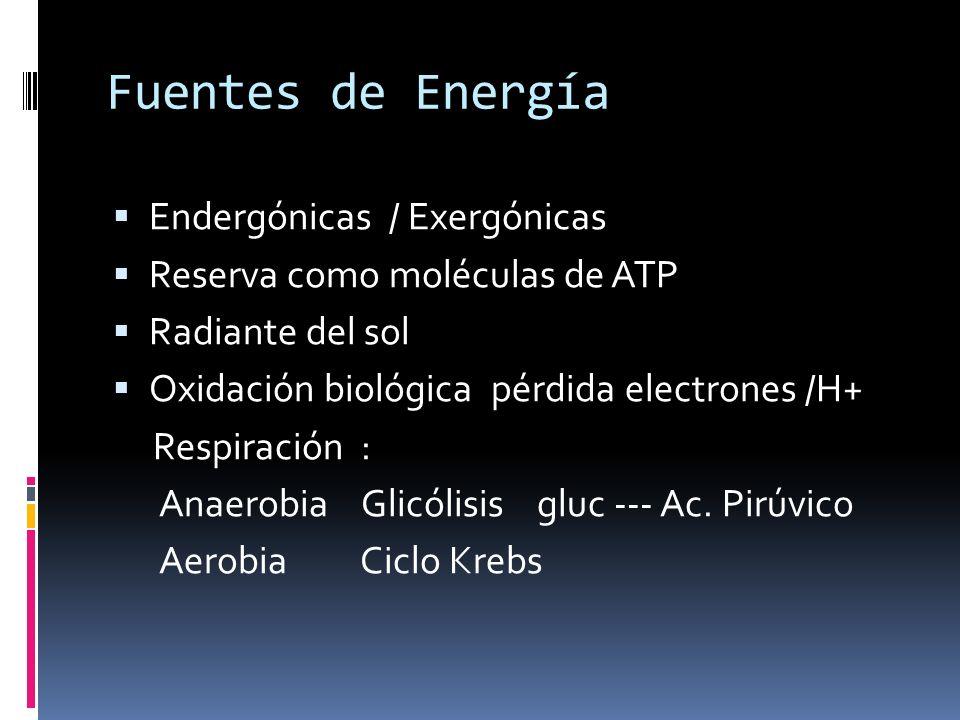Fuentes de Energía Endergónicas / Exergónicas
