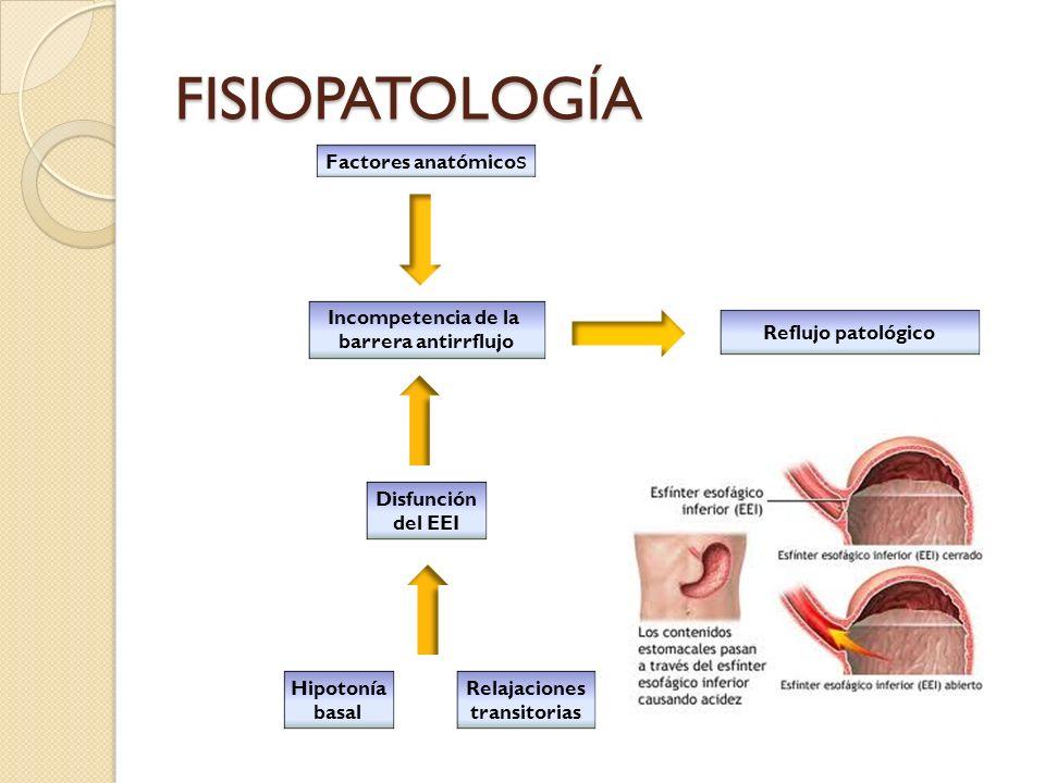 FISIOPATOLOGÍA Factores anatómicos Incompetencia de la