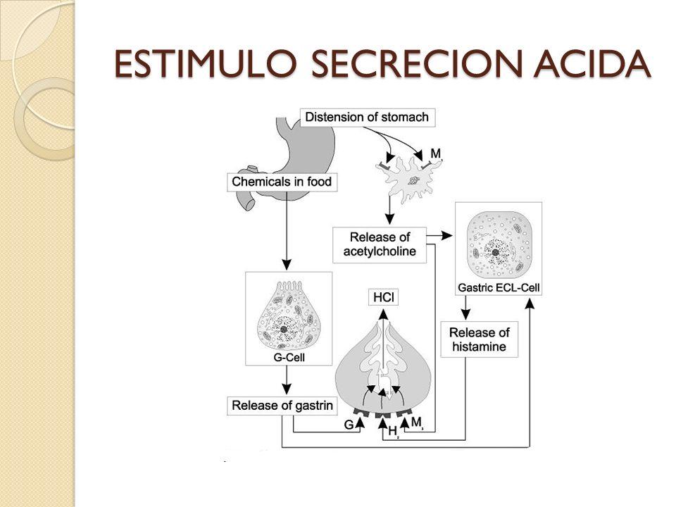 ESTIMULO SECRECION ACIDA