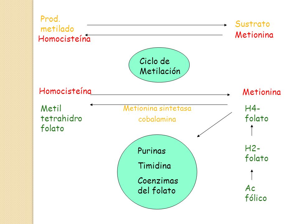 Metil tetrahidrofolato H4-folato