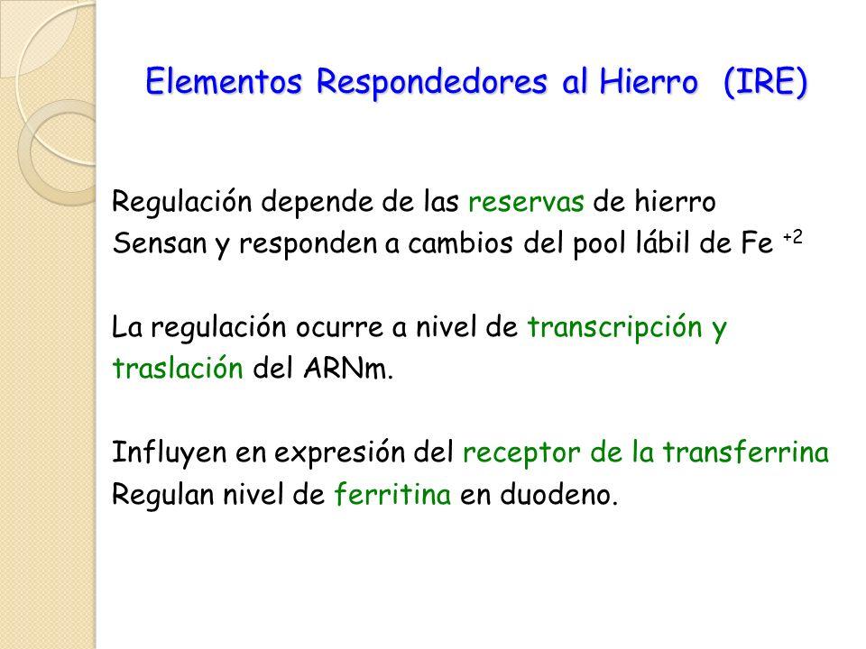 Elementos Respondedores al Hierro (IRE)