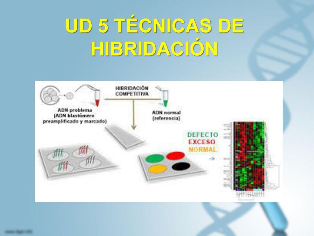 UD 5 TÉCNICAS DE HIBRIDACIÓN