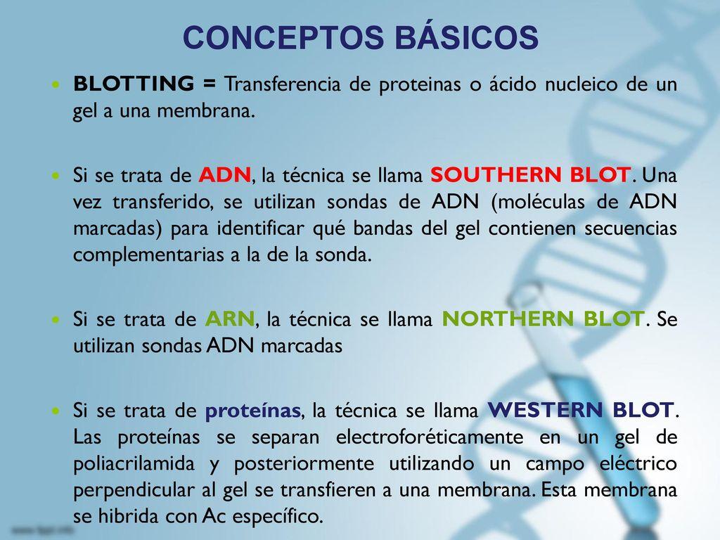 CONCEPTOS BÁSICOS BLOTTING = Transferencia de proteinas o ácido nucleico de un gel a una membrana.