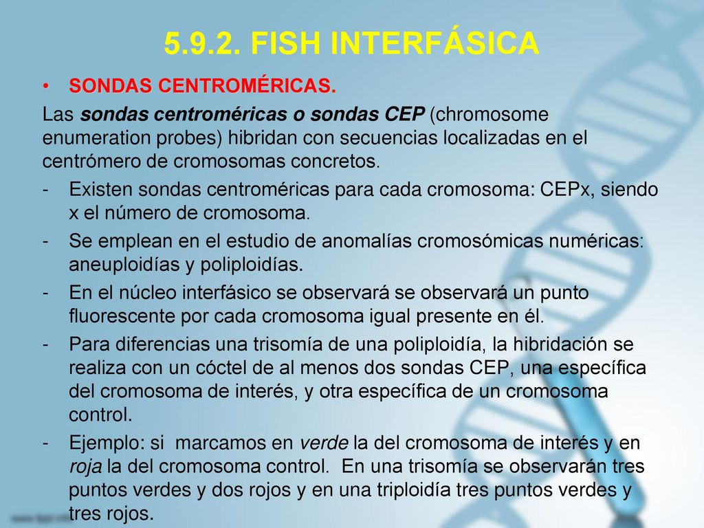 5.9.2. FISH INTERFÁSICA SONDAS CENTROMÉRICAS.