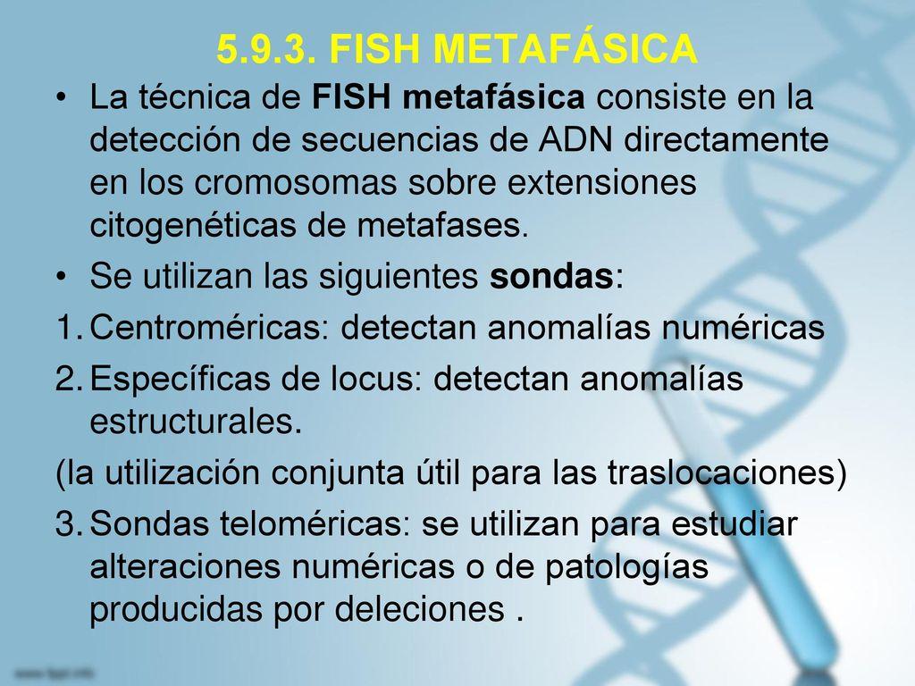 5.9.3. FISH METAFÁSICA