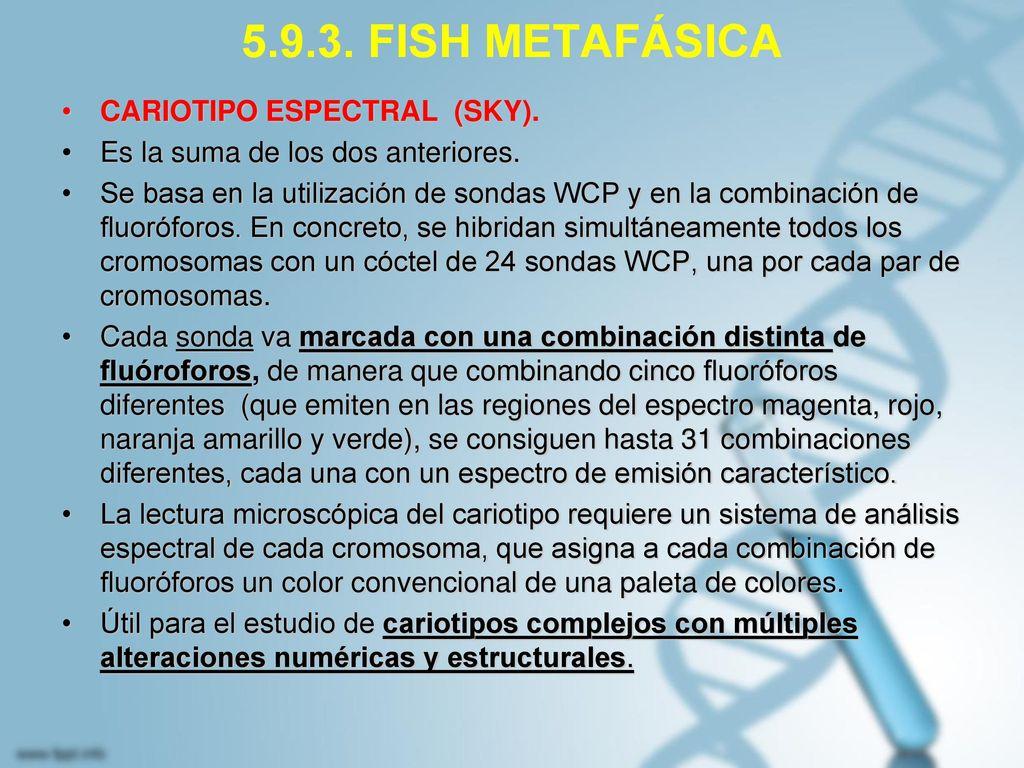 5.9.3. FISH METAFÁSICA CARIOTIPO ESPECTRAL (SKY).